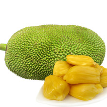 High quality jackfruit fruit Seeds artocarpus heterophyllus seeds For planting