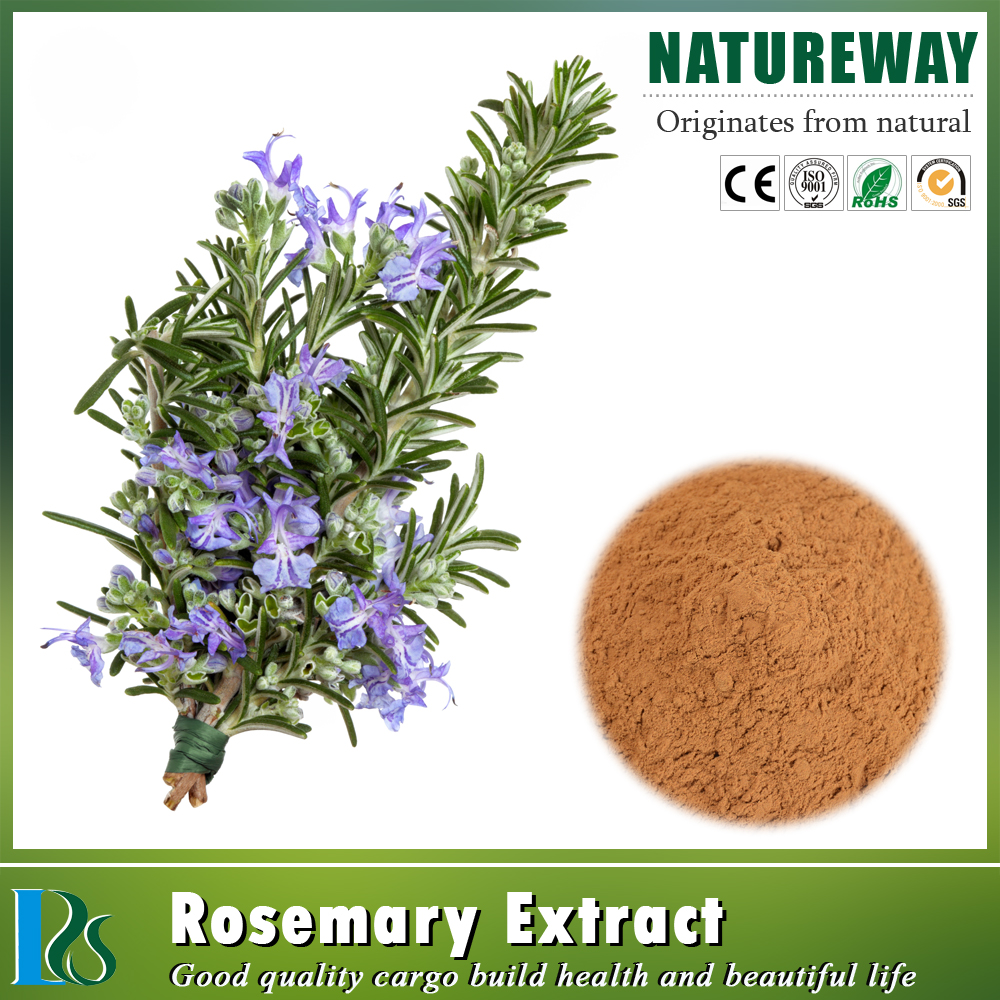 GMP Factory organic rosemary extract powder 3650--09-7 carnosic acid