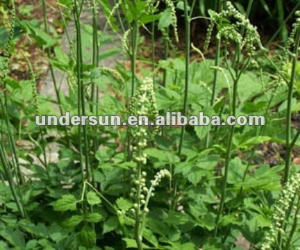 Black cohosh P.E brown fine powder 2.5% 5% HPLC CAS: 84776-26-1