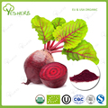ISO manufacturer beet root extract powder