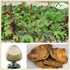 Rheum officinale Baill. Plant Extract Powder