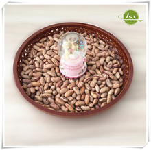 JSX 2013 New Crop Light Red Speckled Kidney Bean / Long Shape Dried Canned Pinto Beans Size 220-240