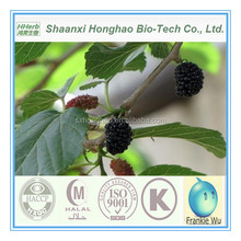 white mulberry leaf extract powder