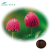 100% Natural Isoflavones 8%-80% Red Clover Extract