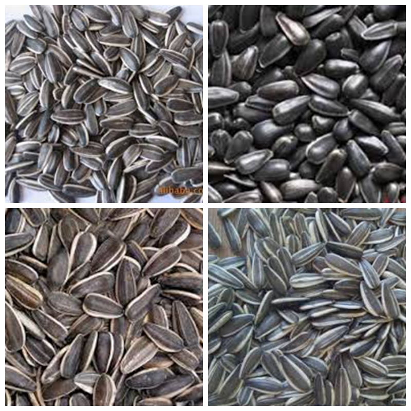 organic sunflower seeds in shell chinese sunflower seeds hybrid sunflower seed