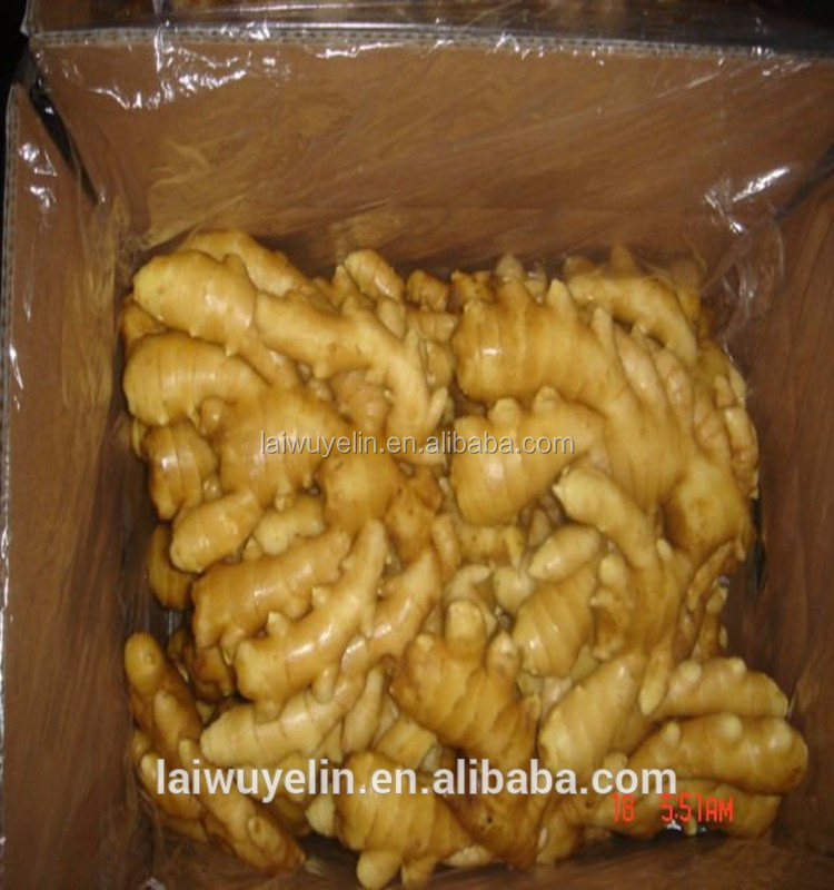 HACCP Certification and Old Ginger Variety price of fresh ginger
