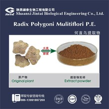100% Pure Natural Radix Polygonl Multiflori Extract Powder