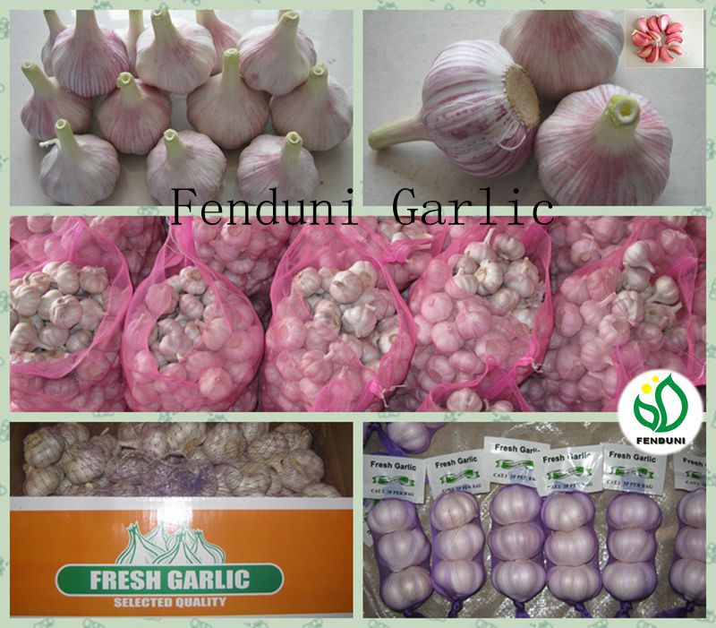 Fresh Ajo En Caja Price From China
