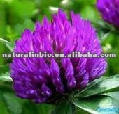 Red Clover Dry Extract Powder