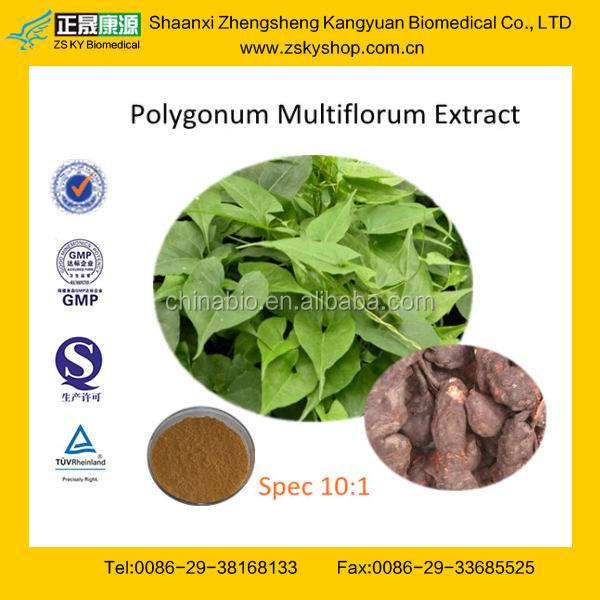Natural Plant Extract Polygonum multiflorum Root Extract