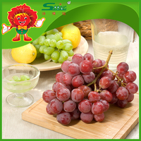 export fresh Fruits & Vegetables fresh chinese red globe grapes