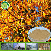 Strong and best product ginkgo biloba plant extract/24:6