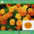 Manufacturer High Quality Tagetes Erecta Extract/ Natural plant extract Marigold Flower Extract P.E.