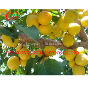 Best Canned Apricot In Syrup top quality new crop hot sell