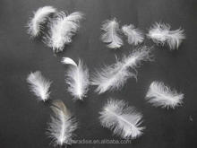 Wholesale raw white duck down feather for pillow/duvet filling material