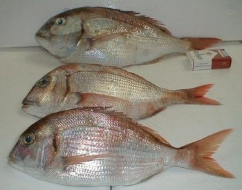 Red sea bream pink porgy fresh fillets buy bream porgy for Porgy fish recipe