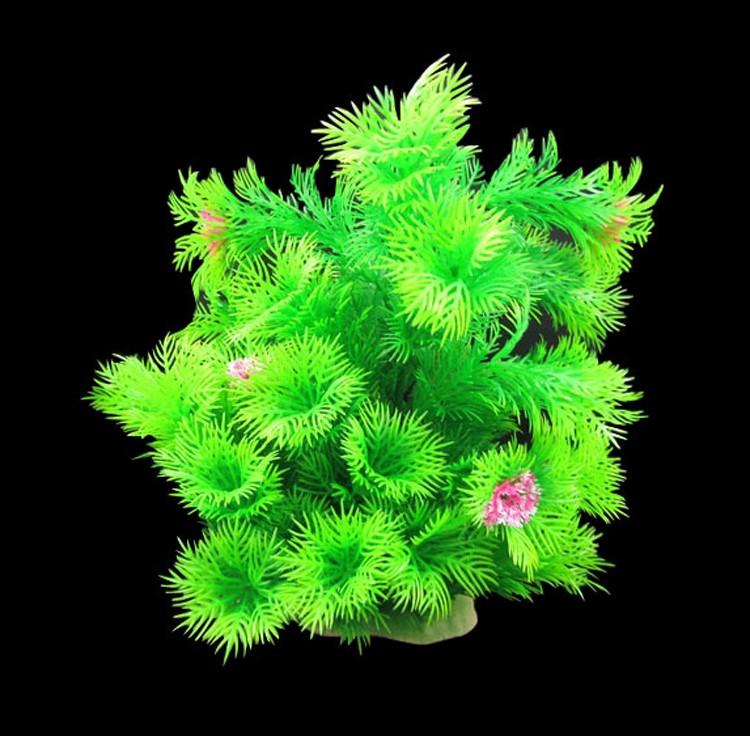 Wholesale aquatic plants online buy best aquatic plants for Best aquatic plants