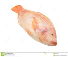 2016 high quality 500-800g Whole Round Frozen Red Tilapia for sale