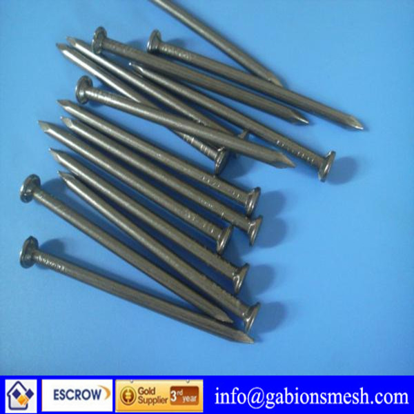 Common iron nail/galvanized iron nail/China professional supplier