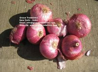 Fresh Red ONION Big Indian Nashik / Nasik Onion for Gulf
