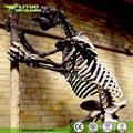 Realisitc Life Size Animal Skeleton Model for Sale