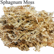 Wholesale Home Garden Supplies Organic Compost Dried Sphagnum Moss Suitable for Staghorns, Elk Horns and Phalaenopsis Orchids