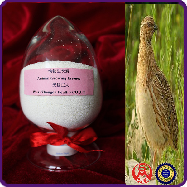 Animal Growing Essence High tech poultry feed raw material