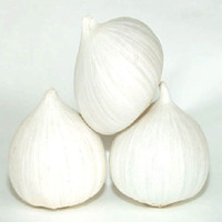 New crop natural solo garlic price