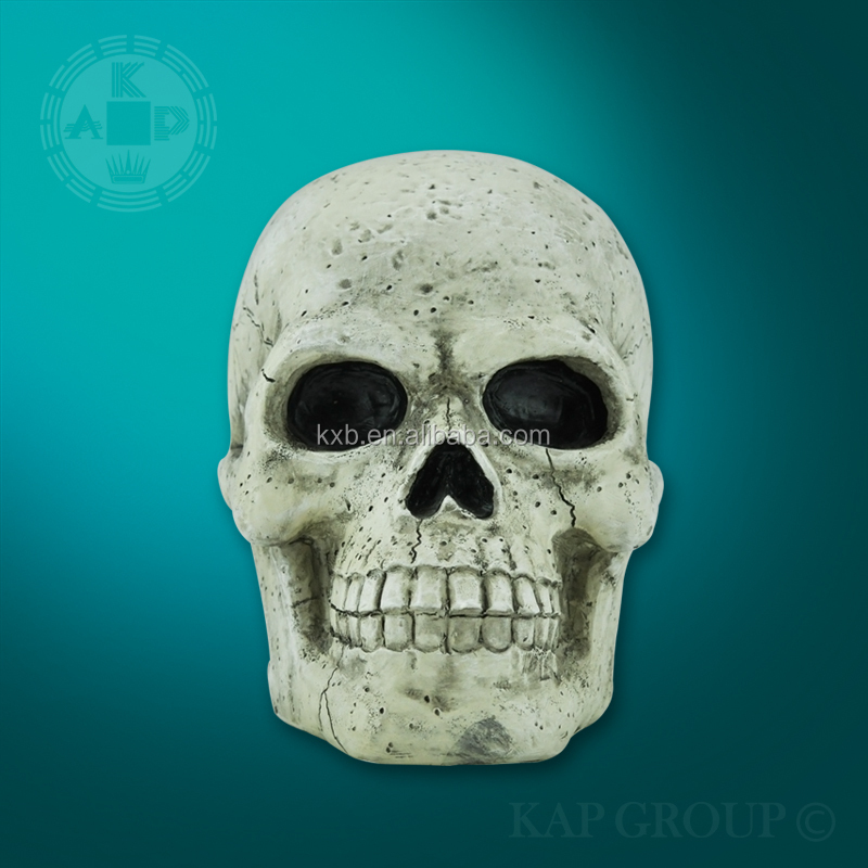 Advanced Life-Size Skull Model, Medical anatomical skull model