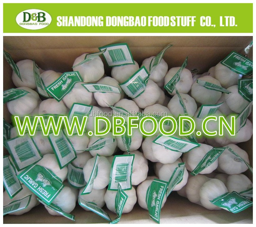 New crop fresh garlic/Wholesale white garlic China origin/China garlic price