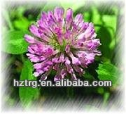 high quality red clover extract / Isoflavones