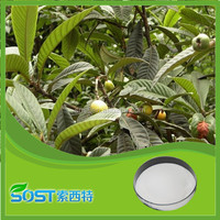 high quality wholesale bulk ursolic acid loquat leaves extract