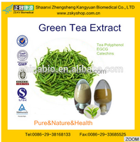 GMP manufacturer supply Natural and Healthy Green Tea Powder Extract/Catechin