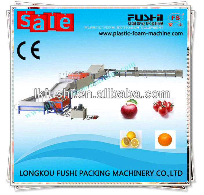 Fruit wash and sort equipment