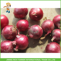 Supply Fresh Red Onion In Cold Warehouse