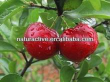 Acerola Cherry Extract 5%-25% Vitamin C