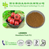 Professional Manufacturer High Quality Hawthorn Fruit P.E. 10%