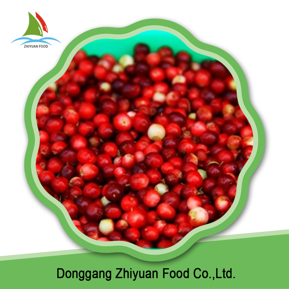 Rich in vitamin c 100% fresh lingonberry material frozen lingonberry