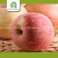 fresh fruits exporters/fake red apple/indian custard apple