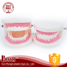 Manufacturer Lowest Price High Quality tooth model