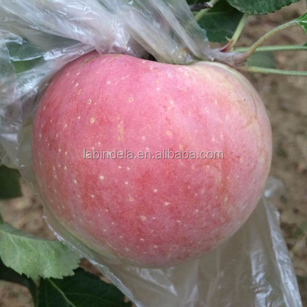 Sweet Delicious Fresh Golden Apple Fruits From China / film bagged Fuji apple