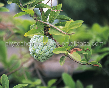 Annona muricata Extract acetogenins powder extract with high quality