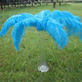 Large blue colour bulk ostrich feathers for wedding party