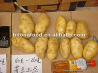 whole sale big quantity fresh yellow potato (chinese)