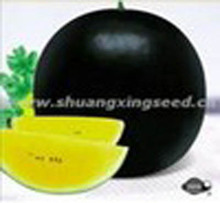 planting watermelon hybrid seed Black Crystal