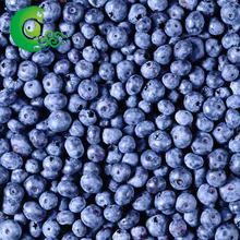 Factory prices natural organic frozen iqf blueberry