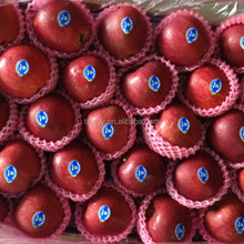 High quality red mature huaniu apple exporter in China