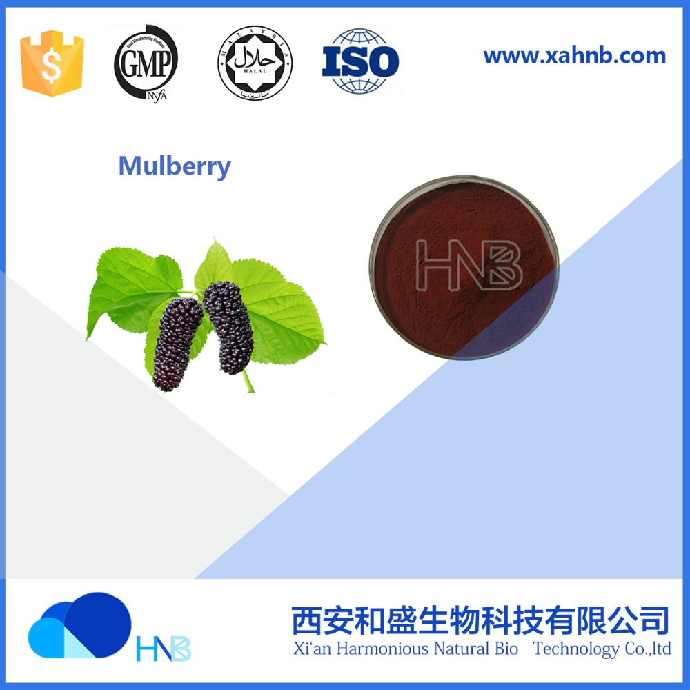 HNB supply Mulberry Fruit extract / Mulberry/ Morus Alba P.E.