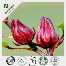 Roselle extract powder Hibiscus sabdariffa Proanthocyanidin for juice concentrate