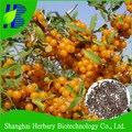 Top quality Hippophae rhamnoides seeds